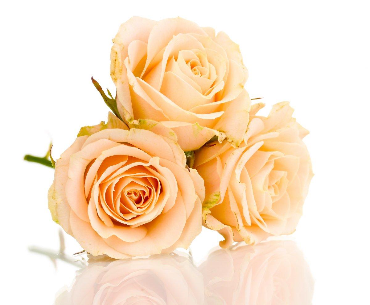 Постер Розы Прекрасные розы, изолированных на беломРозы<br>Постер на холсте или бумаге. Любого нужного вам размера. В раме или без. Подвес в комплекте. Трехслойная надежная упаковка. Доставим в любую точку России. Вам осталось только повесить картину на стену!<br>