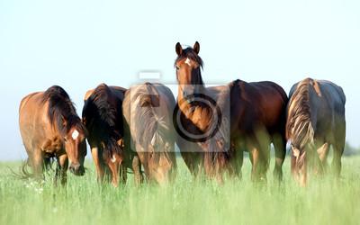 Постер Лошади Группа диких лошадей в поле, на утро.Лошади<br>Постер на холсте или бумаге. Любого нужного вам размера. В раме или без. Подвес в комплекте. Трехслойная надежная упаковка. Доставим в любую точку России. Вам осталось только повесить картину на стену!<br>
