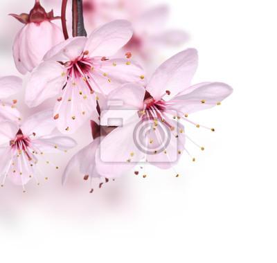 Постер Сакура Розовая весна цветы границыСакура<br>Постер на холсте или бумаге. Любого нужного вам размера. В раме или без. Подвес в комплекте. Трехслойная надежная упаковка. Доставим в любую точку России. Вам осталось только повесить картину на стену!<br>