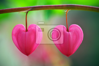 Два сердца цветок, 30x20 см, на бумаге02.14 День Святого Валентина (День всех влюбленных)<br>Постер на холсте или бумаге. Любого нужного вам размера. В раме или без. Подвес в комплекте. Трехслойная надежная упаковка. Доставим в любую точку России. Вам осталось только повесить картину на стену!<br>