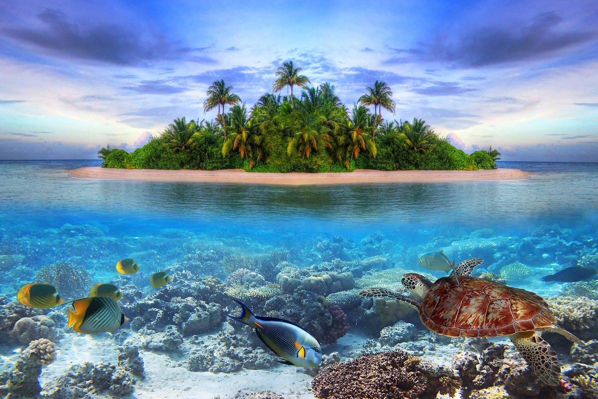 Постер Черепахи Морская жизнь на тропическом острове МальдивыЧерепахи<br>Постер на холсте или бумаге. Любого нужного вам размера. В раме или без. Подвес в комплекте. Трехслойная надежная упаковка. Доставим в любую точку России. Вам осталось только повесить картину на стену!<br>