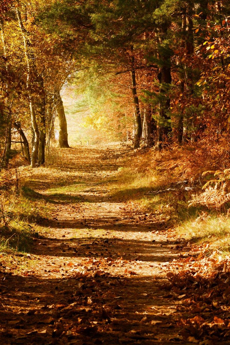Постер Осень Осенний лесОсень<br>Постер на холсте или бумаге. Любого нужного вам размера. В раме или без. Подвес в комплекте. Трехслойная надежная упаковка. Доставим в любую точку России. Вам осталось только повесить картину на стену!<br>