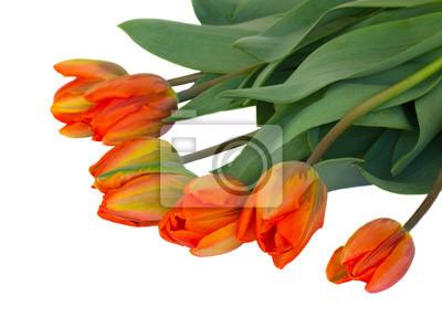 Постер Тюльпаны Оранжевый букет тюльпановТюльпаны<br>Постер на холсте или бумаге. Любого нужного вам размера. В раме или без. Подвес в комплекте. Трехслойная надежная упаковка. Доставим в любую точку России. Вам осталось только повесить картину на стену!<br>