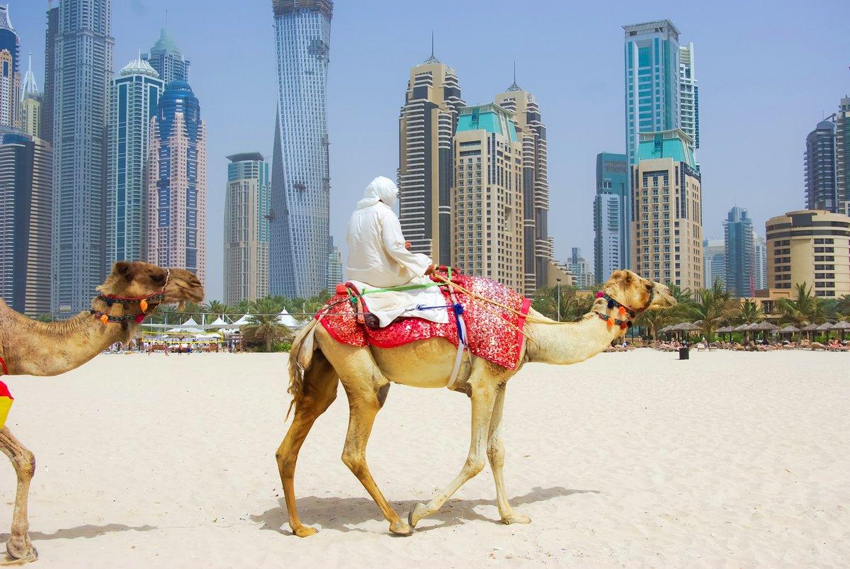 Постер ОАЭ Дубай Верблюда на городской пейзаж общего уровня, Объединенных арабских Эмиратов.ОАЭ<br>Постер на холсте или бумаге. Любого нужного вам размера. В раме или без. Подвес в комплекте. Трехслойная надежная упаковка. Доставим в любую точку России. Вам осталось только повесить картину на стену!<br>