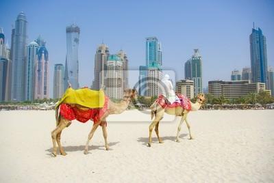 Постер ОАЭ Дубай Верблюда на городской пейзаж общего уровня, Объединенных арабских ЭмиратовОАЭ<br>Постер на холсте или бумаге. Любого нужного вам размера. В раме или без. Подвес в комплекте. Трехслойная надежная упаковка. Доставим в любую точку России. Вам осталось только повесить картину на стену!<br>