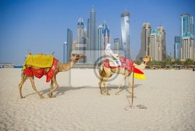 Постер ОАЭ Верблюд, на Пляже, в Дубай в городской фонОАЭ<br>Постер на холсте или бумаге. Любого нужного вам размера. В раме или без. Подвес в комплекте. Трехслойная надежная упаковка. Доставим в любую точку России. Вам осталось только повесить картину на стену!<br>