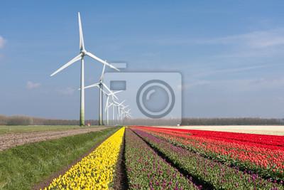 Постер Тюльпаны Большой голландский красочные тюльпанные поля с windturbinesТюльпаны<br>Постер на холсте или бумаге. Любого нужного вам размера. В раме или без. Подвес в комплекте. Трехслойная надежная упаковка. Доставим в любую точку России. Вам осталось только повесить картину на стену!<br>