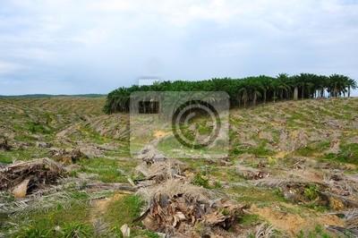 Постер Малайзия Обезлесение пальмовые насаждения деревьевМалайзия<br>Постер на холсте или бумаге. Любого нужного вам размера. В раме или без. Подвес в комплекте. Трехслойная надежная упаковка. Доставим в любую точку России. Вам осталось только повесить картину на стену!<br>