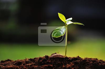 Постер Весна Зеленый Росток растет из семени,Весна<br>Постер на холсте или бумаге. Любого нужного вам размера. В раме или без. Подвес в комплекте. Трехслойная надежная упаковка. Доставим в любую точку России. Вам осталось только повесить картину на стену!<br>