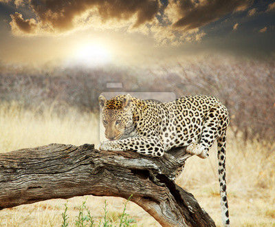 Постер Животные Леопард, 24x20 см, на бумагеЛеопарды<br>Постер на холсте или бумаге. Любого нужного вам размера. В раме или без. Подвес в комплекте. Трехслойная надежная упаковка. Доставим в любую точку России. Вам осталось только повесить картину на стену!<br>