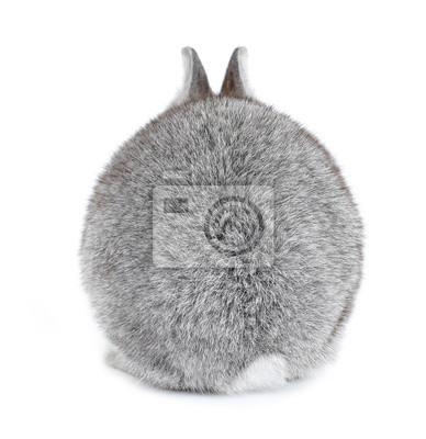 Постер Кролики Серый кролик Банни ребенка меховой мячик вид сзадиКролики<br>Постер на холсте или бумаге. Любого нужного вам размера. В раме или без. Подвес в комплекте. Трехслойная надежная упаковка. Доставим в любую точку России. Вам осталось только повесить картину на стену!<br>