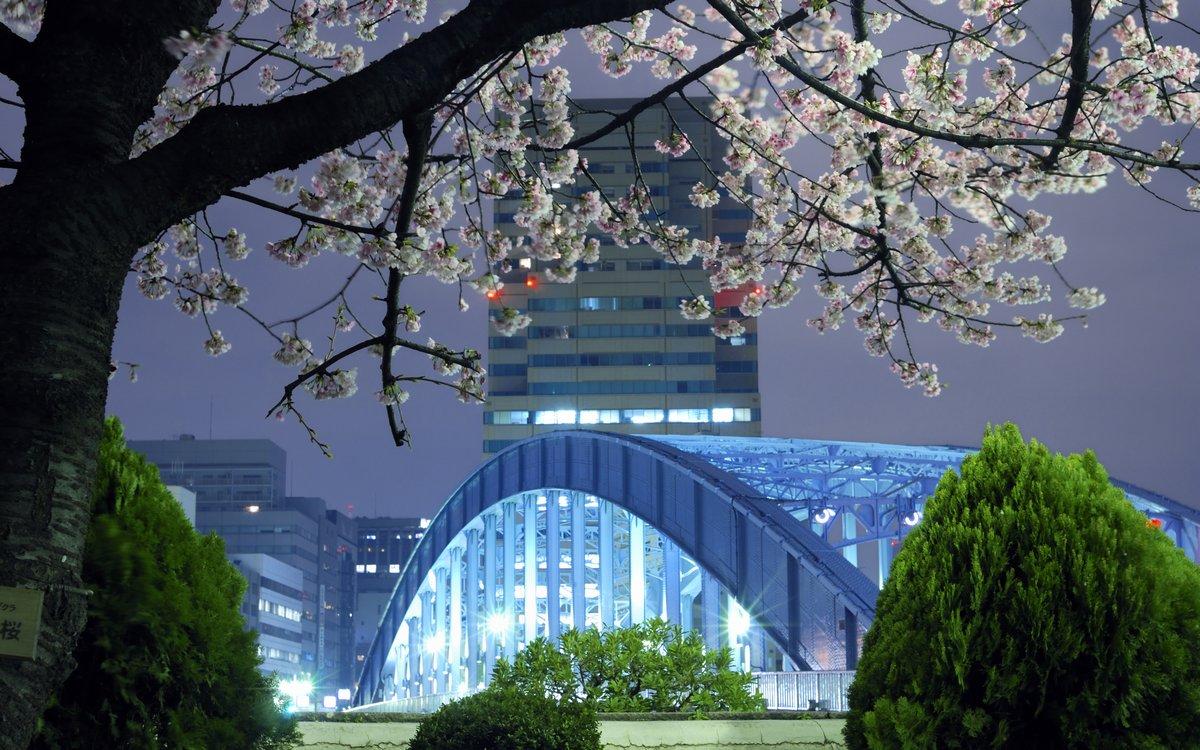 Постер Токио Токио веснойТокио<br>Постер на холсте или бумаге. Любого нужного вам размера. В раме или без. Подвес в комплекте. Трехслойная надежная упаковка. Доставим в любую точку России. Вам осталось только повесить картину на стену!<br>