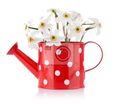 Постер Нарциссы Белые весенние цветы в Красной вазе, изолированных на белом фонеНарциссы<br>Постер на холсте или бумаге. Любого нужного вам размера. В раме или без. Подвес в комплекте. Трехслойная надежная упаковка. Доставим в любую точку России. Вам осталось только повесить картину на стену!<br>