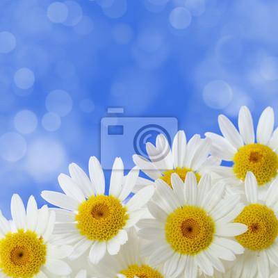Постер Ромашки Дейзи цветы на голубом заметил фонРомашки<br>Постер на холсте или бумаге. Любого нужного вам размера. В раме или без. Подвес в комплекте. Трехслойная надежная упаковка. Доставим в любую точку России. Вам осталось только повесить картину на стену!<br>