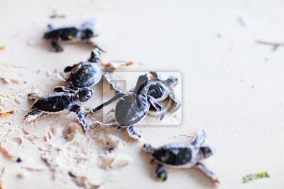 Постер Черепахи Ребенок зеленые черепахиЧерепахи<br>Постер на холсте или бумаге. Любого нужного вам размера. В раме или без. Подвес в комплекте. Трехслойная надежная упаковка. Доставим в любую точку России. Вам осталось только повесить картину на стену!<br>
