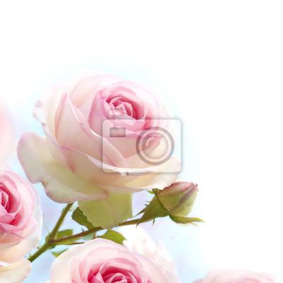Постер Розы Розовые розы на голубом фоне белогоРозы<br>Постер на холсте или бумаге. Любого нужного вам размера. В раме или без. Подвес в комплекте. Трехслойная надежная упаковка. Доставим в любую точку России. Вам осталось только повесить картину на стену!<br>