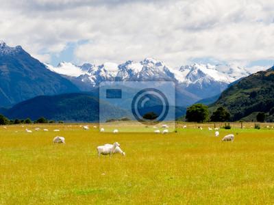 Постер Овцы Aoraki, Mt Cook высокий пик Южных Альп, NZОвцы<br>Постер на холсте или бумаге. Любого нужного вам размера. В раме или без. Подвес в комплекте. Трехслойная надежная упаковка. Доставим в любую точку России. Вам осталось только повесить картину на стену!<br>