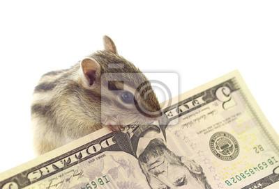 Постер Животные Бурундук схватив 5 долларов, 29x20 см, на бумагеБурундуки<br>Постер на холсте или бумаге. Любого нужного вам размера. В раме или без. Подвес в комплекте. Трехслойная надежная упаковка. Доставим в любую точку России. Вам осталось только повесить картину на стену!<br>