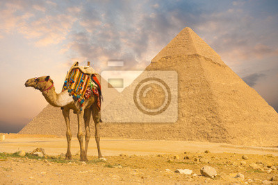Постер Египет Верблюд Стоял Передней Пирамиды HЕгипет<br>Постер на холсте или бумаге. Любого нужного вам размера. В раме или без. Подвес в комплекте. Трехслойная надежная упаковка. Доставим в любую точку России. Вам осталось только повесить картину на стену!<br>