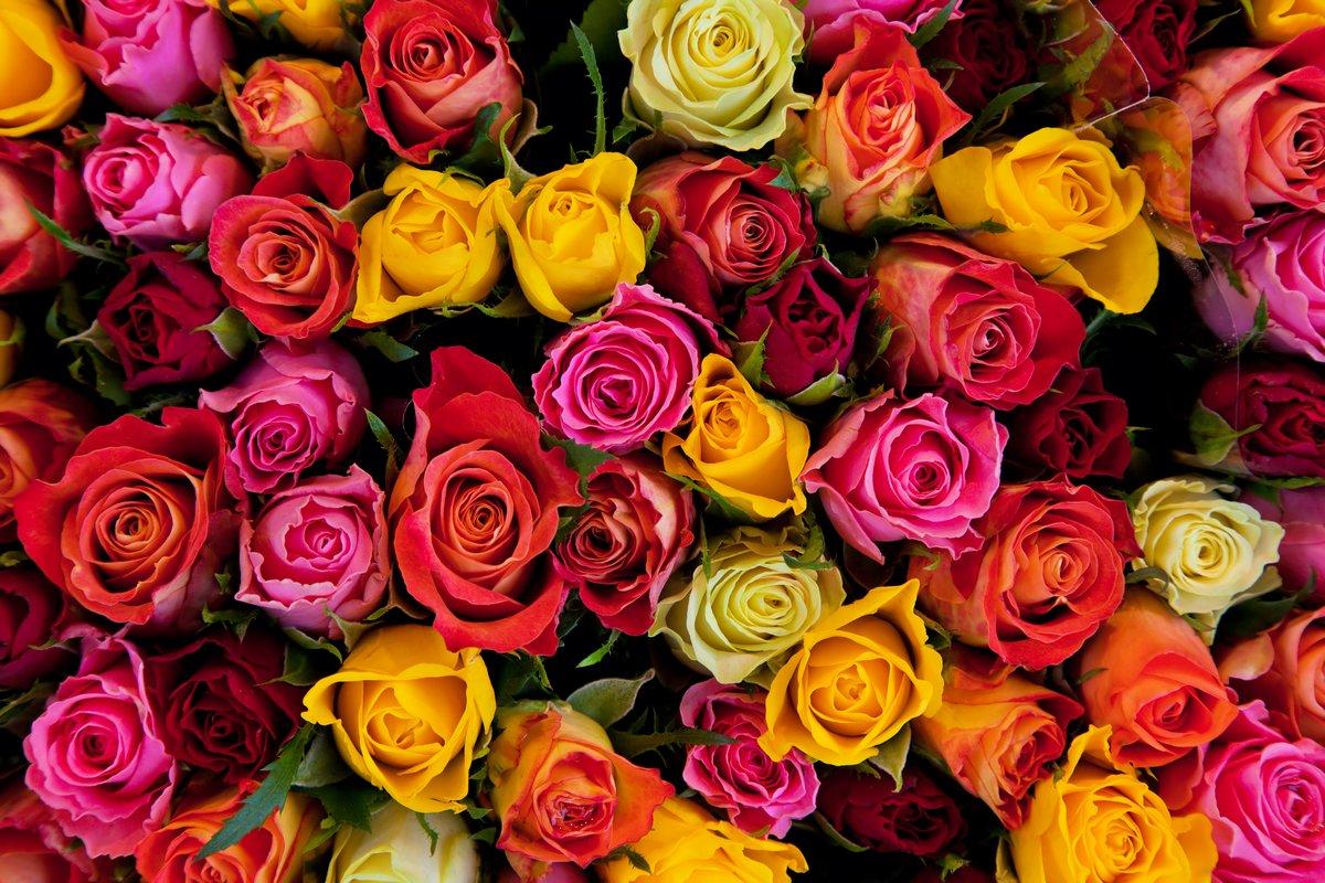 Постер Розы Цветы. Красочные розы фонРозы<br>Постер на холсте или бумаге. Любого нужного вам размера. В раме или без. Подвес в комплекте. Трехслойная надежная упаковка. Доставим в любую точку России. Вам осталось только повесить картину на стену!<br>