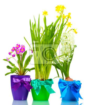 Постер Гиацинты Красивые весенние цветы в горшках, изолированных на беломГиацинты<br>Постер на холсте или бумаге. Любого нужного вам размера. В раме или без. Подвес в комплекте. Трехслойная надежная упаковка. Доставим в любую точку России. Вам осталось только повесить картину на стену!<br>