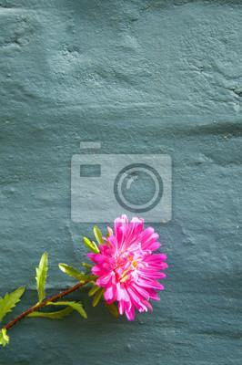 Постер Астры Розовый Aster От Синей СтенойАстры<br>Постер на холсте или бумаге. Любого нужного вам размера. В раме или без. Подвес в комплекте. Трехслойная надежная упаковка. Доставим в любую точку России. Вам осталось только повесить картину на стену!<br>