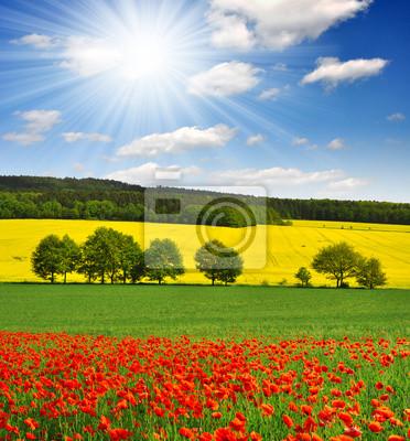 Постер Маки Весенний пейзаж с красными маковое поле в Чешской РеспубликеМаки<br>Постер на холсте или бумаге. Любого нужного вам размера. В раме или без. Подвес в комплекте. Трехслойная надежная упаковка. Доставим в любую точку России. Вам осталось только повесить картину на стену!<br>