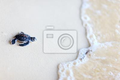 Постер Малайзия Детская зеленая черепахаМалайзия<br>Постер на холсте или бумаге. Любого нужного вам размера. В раме или без. Подвес в комплекте. Трехслойная надежная упаковка. Доставим в любую точку России. Вам осталось только повесить картину на стену!<br>