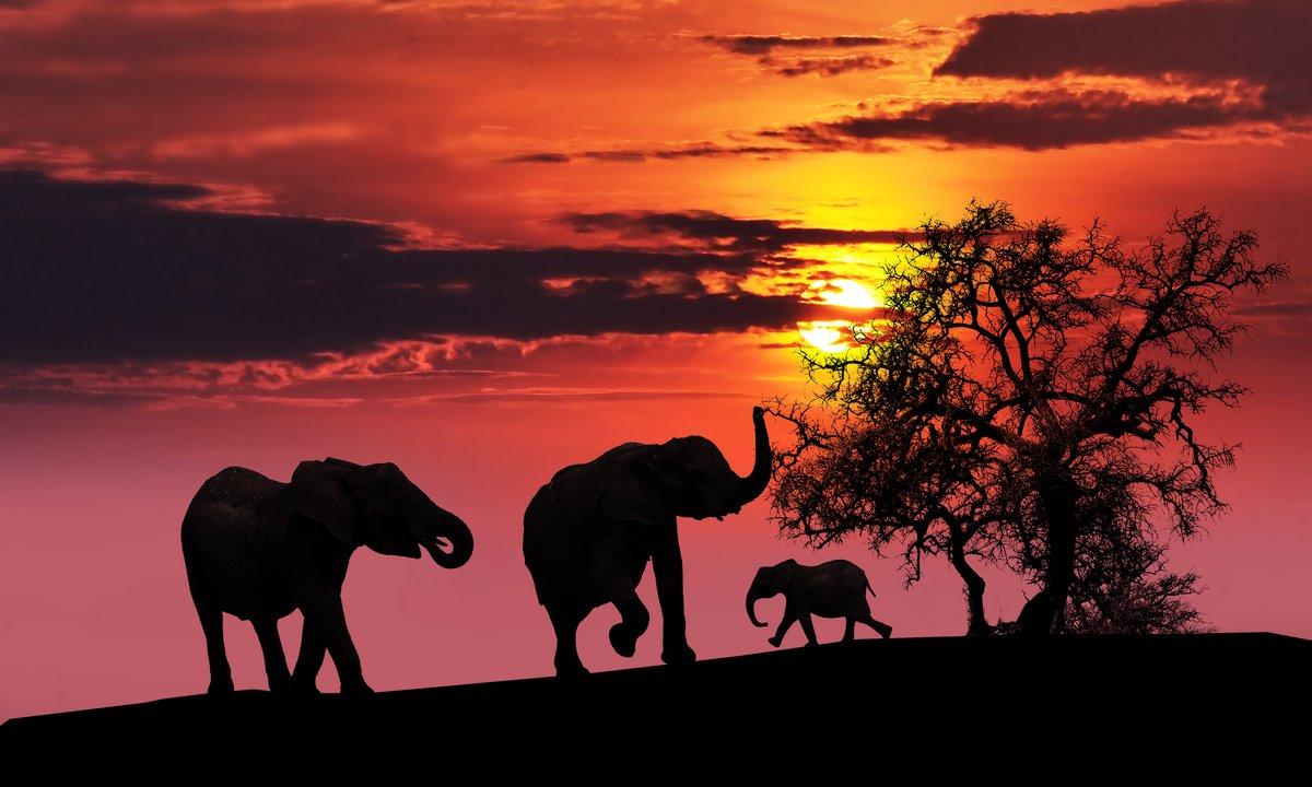 Постер Африканский пейзаж Слоны на закатеАфриканский пейзаж<br>Постер на холсте или бумаге. Любого нужного вам размера. В раме или без. Подвес в комплекте. Трехслойная надежная упаковка. Доставим в любую точку России. Вам осталось только повесить картину на стену!<br>