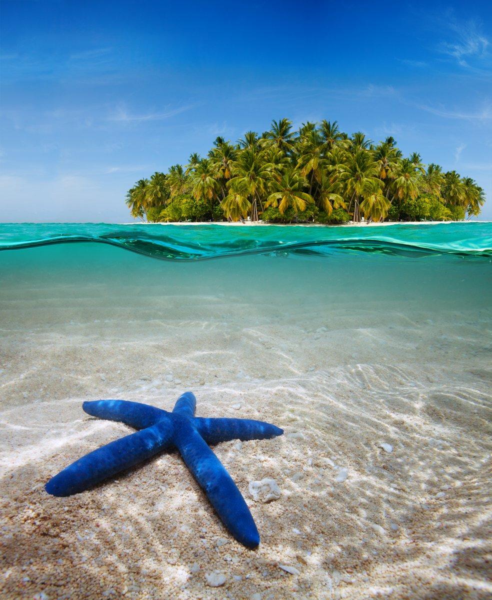 Постер Морские звезды Подводная жизнь рядом красивый островМорские звезды<br>Постер на холсте или бумаге. Любого нужного вам размера. В раме или без. Подвес в комплекте. Трехслойная надежная упаковка. Доставим в любую точку России. Вам осталось только повесить картину на стену!<br>
