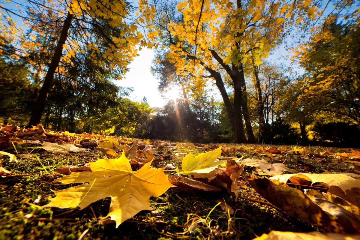 Постер Осень Осень осень парк. Падали листья, в Солнечный деньОсень<br>Постер на холсте или бумаге. Любого нужного вам размера. В раме или без. Подвес в комплекте. Трехслойная надежная упаковка. Доставим в любую точку России. Вам осталось только повесить картину на стену!<br>