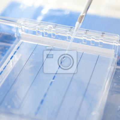 Постер Химическая промышленность Загрузка образец в гель-электрофорезаХимическая промышленность<br>Постер на холсте или бумаге. Любого нужного вам размера. В раме или без. Подвес в комплекте. Трехслойная надежная упаковка. Доставим в любую точку России. Вам осталось только повесить картину на стену!<br>
