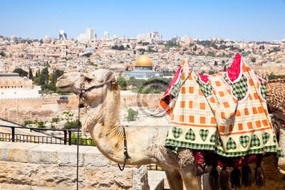 Постер Иерусалим Верблюд на Горе Елеонской , Иерусалим, ИзраильИерусалим<br>Постер на холсте или бумаге. Любого нужного вам размера. В раме или без. Подвес в комплекте. Трехслойная надежная упаковка. Доставим в любую точку России. Вам осталось только повесить картину на стену!<br>