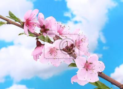 Постер Сакура Красивый розовый цветок персика на фоне синего небаСакура<br>Постер на холсте или бумаге. Любого нужного вам размера. В раме или без. Подвес в комплекте. Трехслойная надежная упаковка. Доставим в любую точку России. Вам осталось только повесить картину на стену!<br>