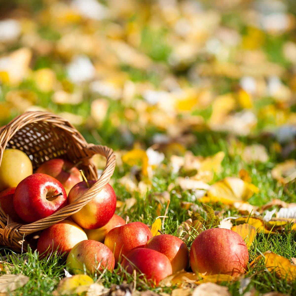 Постер Осень Красные яблоки в корзинеОсень<br>Постер на холсте или бумаге. Любого нужного вам размера. В раме или без. Подвес в комплекте. Трехслойная надежная упаковка. Доставим в любую точку России. Вам осталось только повесить картину на стену!<br>