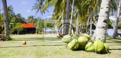 Много кокосов, лежащую на земле возле пальмы, 42x20 см, на бумагеМалайзия<br>Постер на холсте или бумаге. Любого нужного вам размера. В раме или без. Подвес в комплекте. Трехслойная надежная упаковка. Доставим в любую точку России. Вам осталось только повесить картину на стену!<br>
