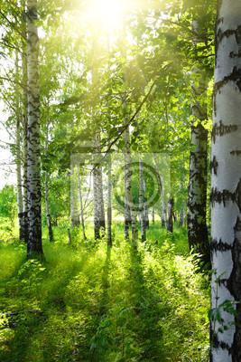 Летом березовые леса с солнцем, 20x30 см, на бумаге01.11 День заповедников и национальных парков<br>Постер на холсте или бумаге. Любого нужного вам размера. В раме или без. Подвес в комплекте. Трехслойная надежная упаковка. Доставим в любую точку России. Вам осталось только повесить картину на стену!<br>