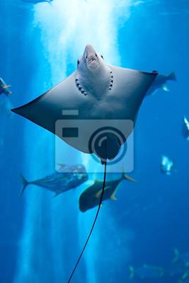 Постер Страны Manta ray плавающий под водой, 20x30 см, на бумагеЕгипет<br>Постер на холсте или бумаге. Любого нужного вам размера. В раме или без. Подвес в комплекте. Трехслойная надежная упаковка. Доставим в любую точку России. Вам осталось только повесить картину на стену!<br>