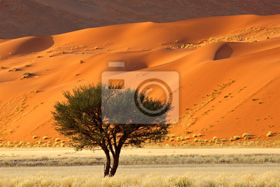 Постер Пейзаж песчаный Красные песчаные дюны и Африканского дерева Акации, Sossusvlei, НамибииПейзаж песчаный<br>Постер на холсте или бумаге. Любого нужного вам размера. В раме или без. Подвес в комплекте. Трехслойная надежная упаковка. Доставим в любую точку России. Вам осталось только повесить картину на стену!<br>