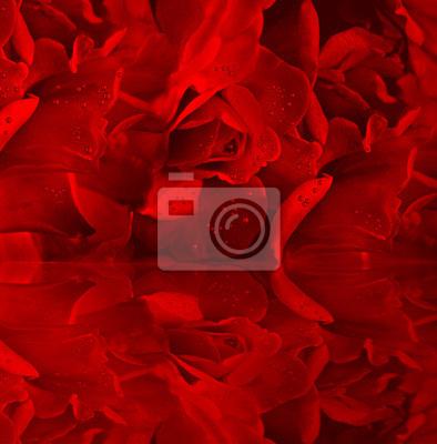 Постер Цветы Красных роз в росе, 20x20 см, на бумагеРозы<br>Постер на холсте или бумаге. Любого нужного вам размера. В раме или без. Подвес в комплекте. Трехслойная надежная упаковка. Доставим в любую точку России. Вам осталось только повесить картину на стену!<br>