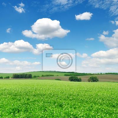 Постер Пейзаж равнинный Поле и голубое небоПейзаж равнинный<br>Постер на холсте или бумаге. Любого нужного вам размера. В раме или без. Подвес в комплекте. Трехслойная надежная упаковка. Доставим в любую точку России. Вам осталось только повесить картину на стену!<br>