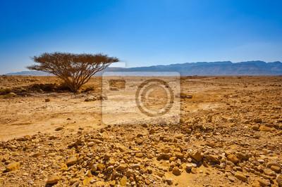 Постер Пейзаж песчаный Дерево в Пустыне,Пейзаж песчаный<br>Постер на холсте или бумаге. Любого нужного вам размера. В раме или без. Подвес в комплекте. Трехслойная надежная упаковка. Доставим в любую точку России. Вам осталось только повесить картину на стену!<br>