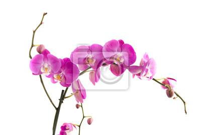 Постер Цветы Орхидеи, 30x20 см, на бумагеОрхидеи<br>Постер на холсте или бумаге. Любого нужного вам размера. В раме или без. Подвес в комплекте. Трехслойная надежная упаковка. Доставим в любую точку России. Вам осталось только повесить картину на стену!<br>