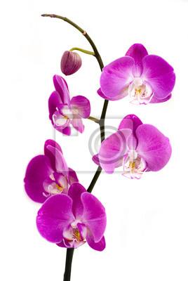 Постер Орхидеи ОрхидеиОрхидеи<br>Постер на холсте или бумаге. Любого нужного вам размера. В раме или без. Подвес в комплекте. Трехслойная надежная упаковка. Доставим в любую точку России. Вам осталось только повесить картину на стену!<br>