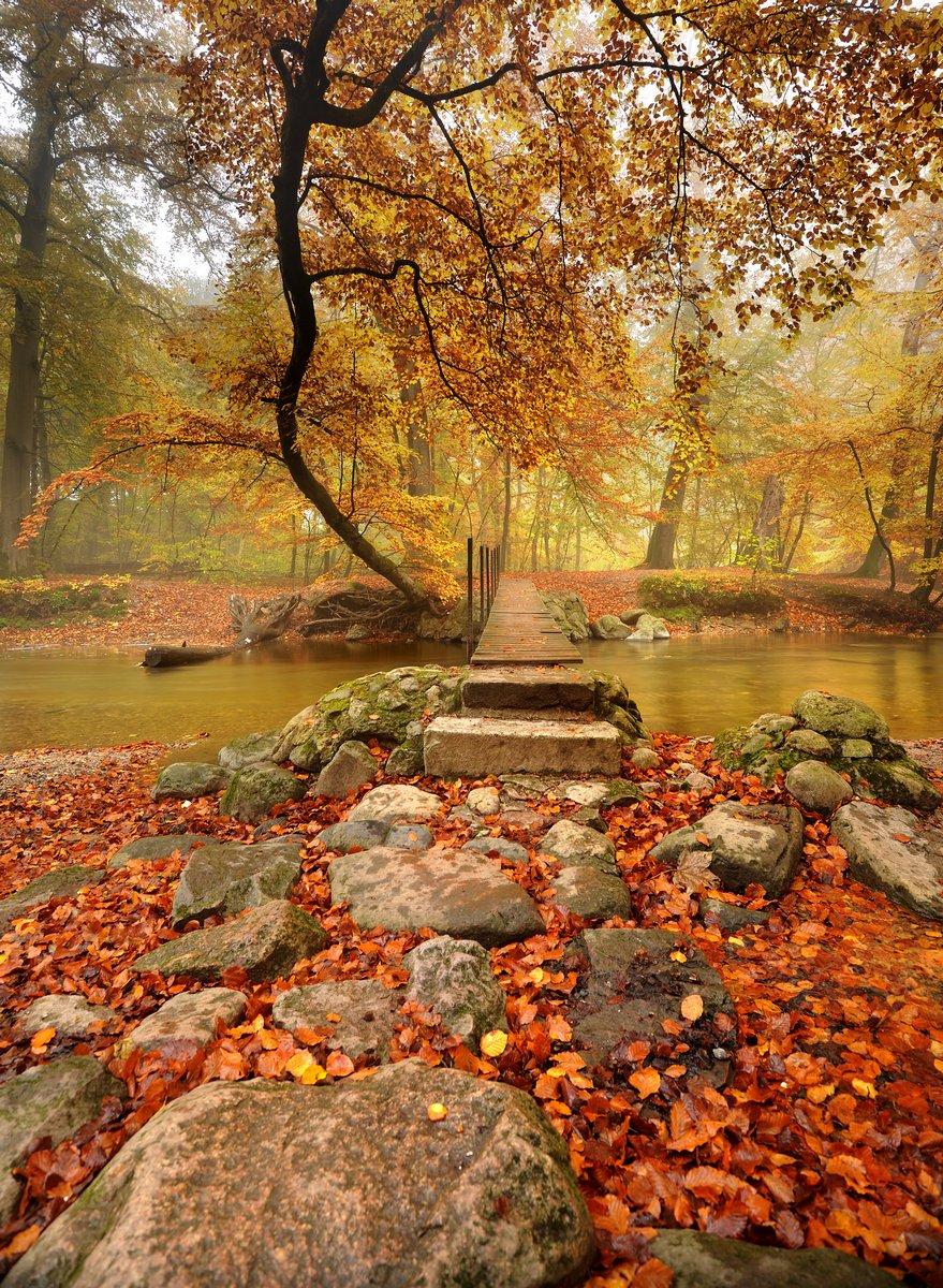 "Постер Осень ""Fall creek"" от Artwall"