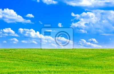 Постер Пейзаж равнинный Пшеничное поле и голубое небо облачноПейзаж равнинный<br>Постер на холсте или бумаге. Любого нужного вам размера. В раме или без. Подвес в комплекте. Трехслойная надежная упаковка. Доставим в любую точку России. Вам осталось только повесить картину на стену!<br>