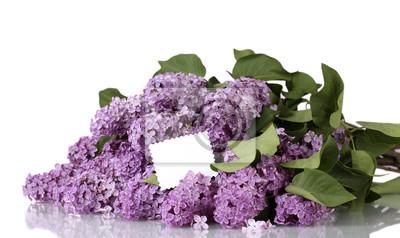Постер Сирень Красивые цветы сирени на фиолетовом фонеСирень<br>Постер на холсте или бумаге. Любого нужного вам размера. В раме или без. Подвес в комплекте. Трехслойная надежная упаковка. Доставим в любую точку России. Вам осталось только повесить картину на стену!<br>