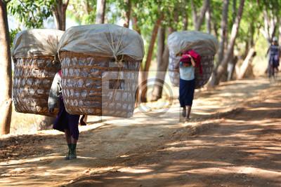 Постер Мьянма (Бирма) Деревня женщины несли большие корзины продукции в МьянмеМьянма (Бирма)<br>Постер на холсте или бумаге. Любого нужного вам размера. В раме или без. Подвес в комплекте. Трехслойная надежная упаковка. Доставим в любую точку России. Вам осталось только повесить картину на стену!<br>