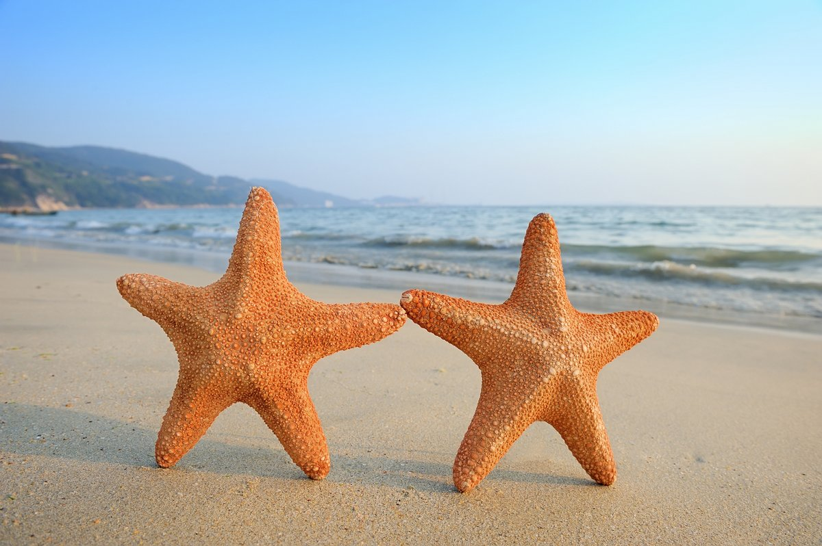 Постер Подводный мир Две морские звезды, сидя на пляже, 30x20 см, на бумагеМорские звезды<br>Постер на холсте или бумаге. Любого нужного вам размера. В раме или без. Подвес в комплекте. Трехслойная надежная упаковка. Доставим в любую точку России. Вам осталось только повесить картину на стену!<br>