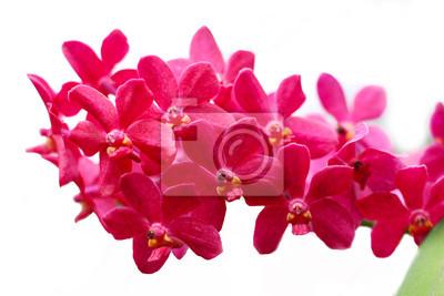 Постер Орхидеи Розовый orhidОрхидеи<br>Постер на холсте или бумаге. Любого нужного вам размера. В раме или без. Подвес в комплекте. Трехслойная надежная упаковка. Доставим в любую точку России. Вам осталось только повесить картину на стену!<br>